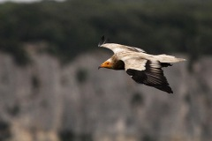 En action pour les vautours - 2016