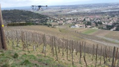 Des drones pour traiter les vignes en Ardèche 202