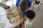 Archéozoologie caverne