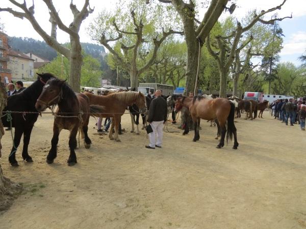 foire aux chevaux 2015